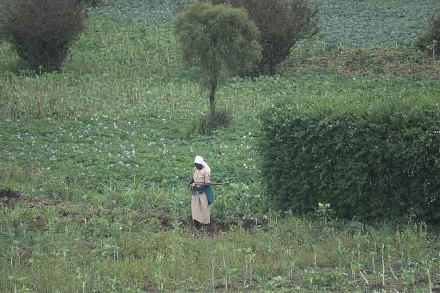 Cultivation, Kikuyu, Kenya - Photographs by Gavin Cologne-Brookes
